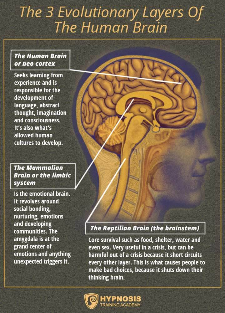 3 evolutionary layers human brain